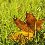 Pflegehinweise im Herbst